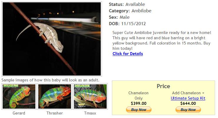 reptile-for-sale